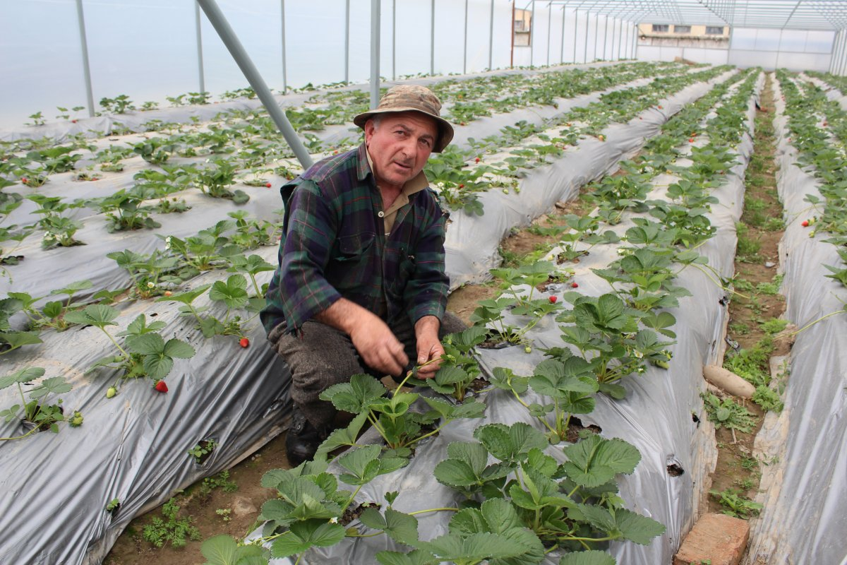 Introducing EU Phytosanitary Standards to Georgia
