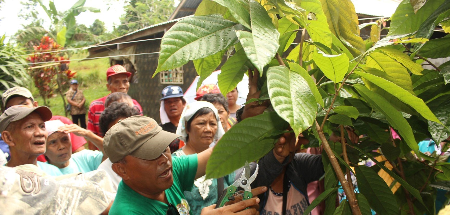 Facilitating the growth of the cacao industry