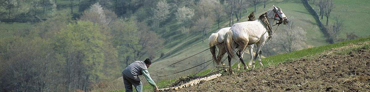 Romania: Sustainable livelihoods and environment